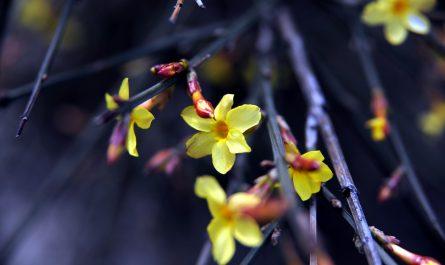 plantes d'extérieur résistant au froid