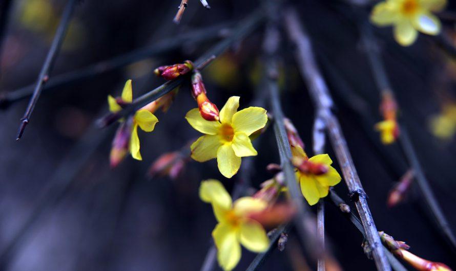 Une petite liste de plantes d'extérieur résistant au froid